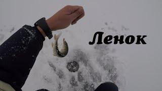 Ленок Зимняя рыбалка 2019 2020 Ленок на мормышку с короедом Зимняя рыбалка