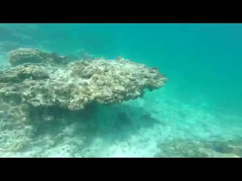 Past Adventure: Snorkeling in the Grand Cayman Islands