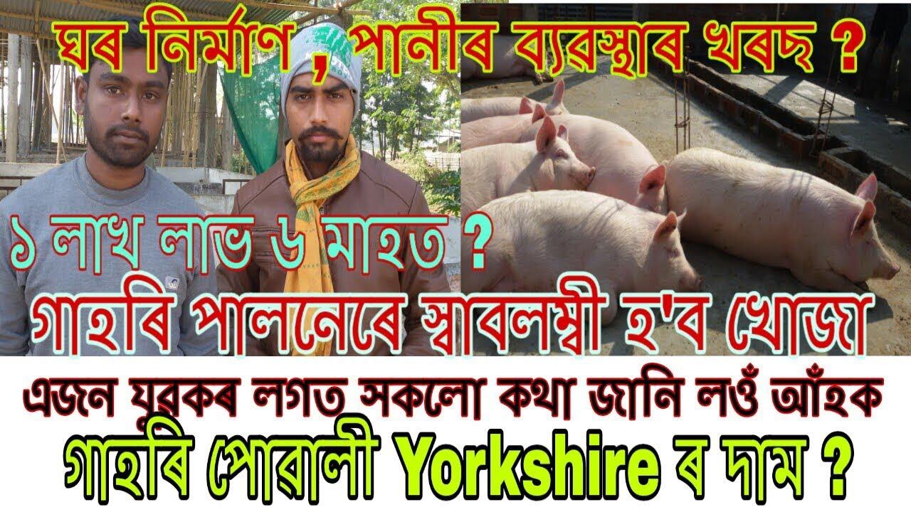 গাহৰি পালনৰ সবিশেষ জানোঁ আঁহক । Pig farming process and profits in assamese