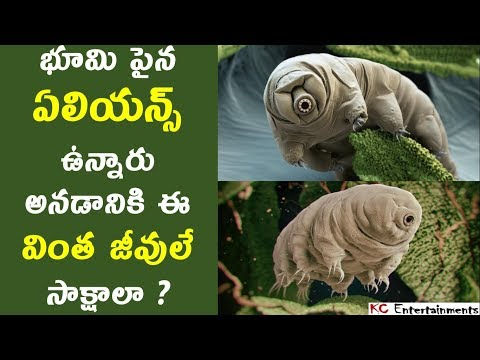 Why Tardigrades(Water Bears) are the Toughest Creatures on Earth in Telugu | KC Entertainments