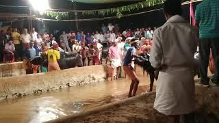 The Kambala, amazing sport. Jayavijaya Jodu kere Kambala 11 02 2018. Race at 1:30 and 3:40 minutes.