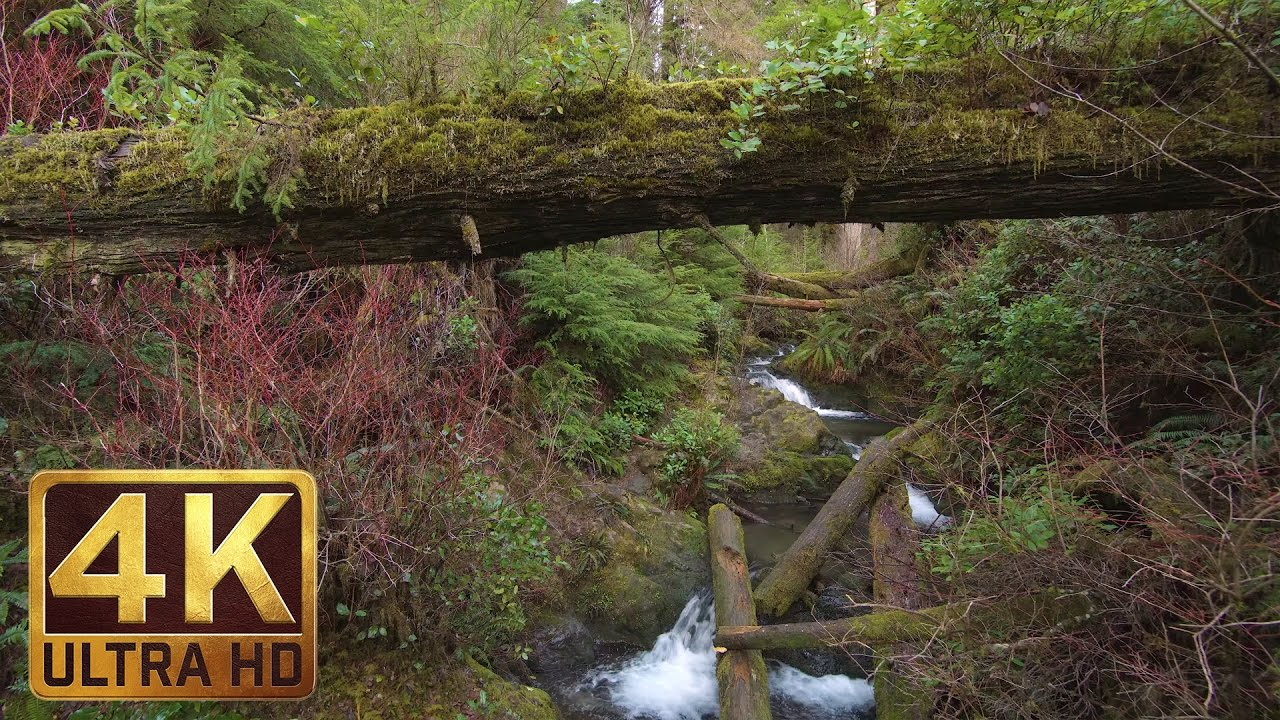Calming Fall Wallpaper Hd 4k Waterfall In Forest Quinault Rainforest Loop Trail