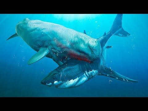 Los 6 enemigos más peligrosos del Megalodón que han existido