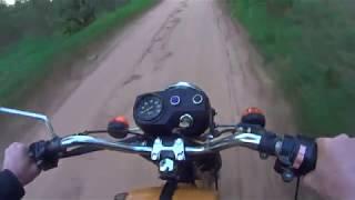 Собаки любят мотоциклы :-)