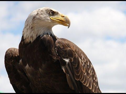 TVOKids Meets Koho the Bald Eagle