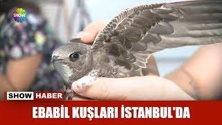Ebabil kuşları İstanbul'da