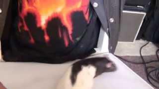 Video RatN'Roll Bessie Turf (sister from Billie Turf). download MP3, 3GP, MP4, WEBM, AVI, FLV November 2017