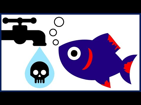 How To Save Your Fish From Chlorine Poisoning