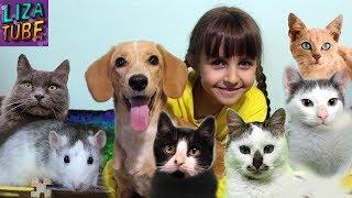 Моё УТРО осеннее школьное Лиза и ПИТОМЦЫ: Коты, Кошки, Котенок, Собаки, Крыски My morning routine