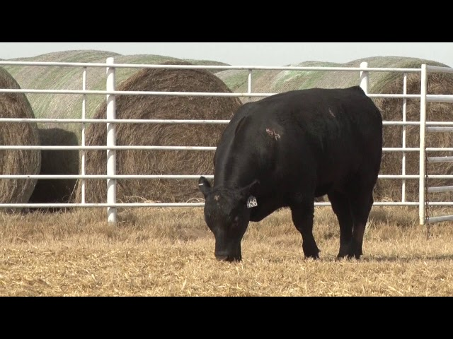 Express Ranches Lot 456