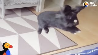 PARKOUR BUNNY: Just A Bunch Of Bunnies Doing Parkour | The Dodo