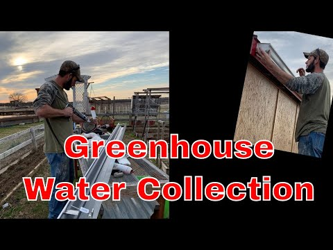 Easy Greenhouse Water Collection - Any 1 Can DIY! 1