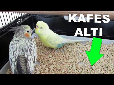 Muhabbet Kuşu Kafes Altında Ne Kullanıyorsunuz ? | Mısır Granülü | Kafes Altı Kumu