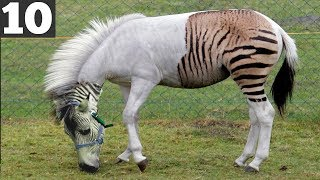 10 Unusual Animal Hybrids that Actually Exist