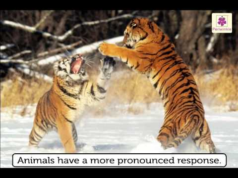 plants and animals similarities and differences environmental