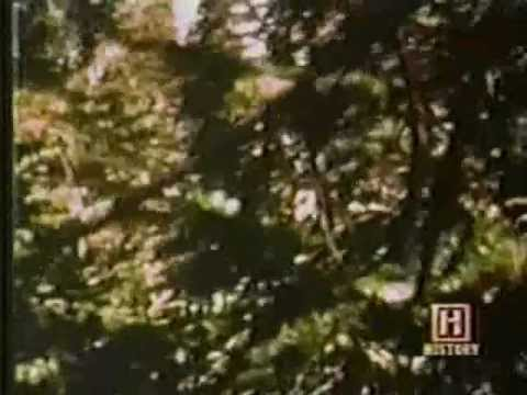 Leonard Nimoy  In Search Of.. **Bigfoot**  Season 1 Episode 5
