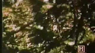 Cryptid Documentaries