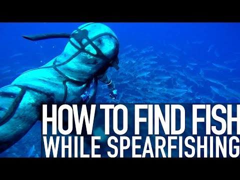 Q&A - Where To Find Fish While Spearfishing?