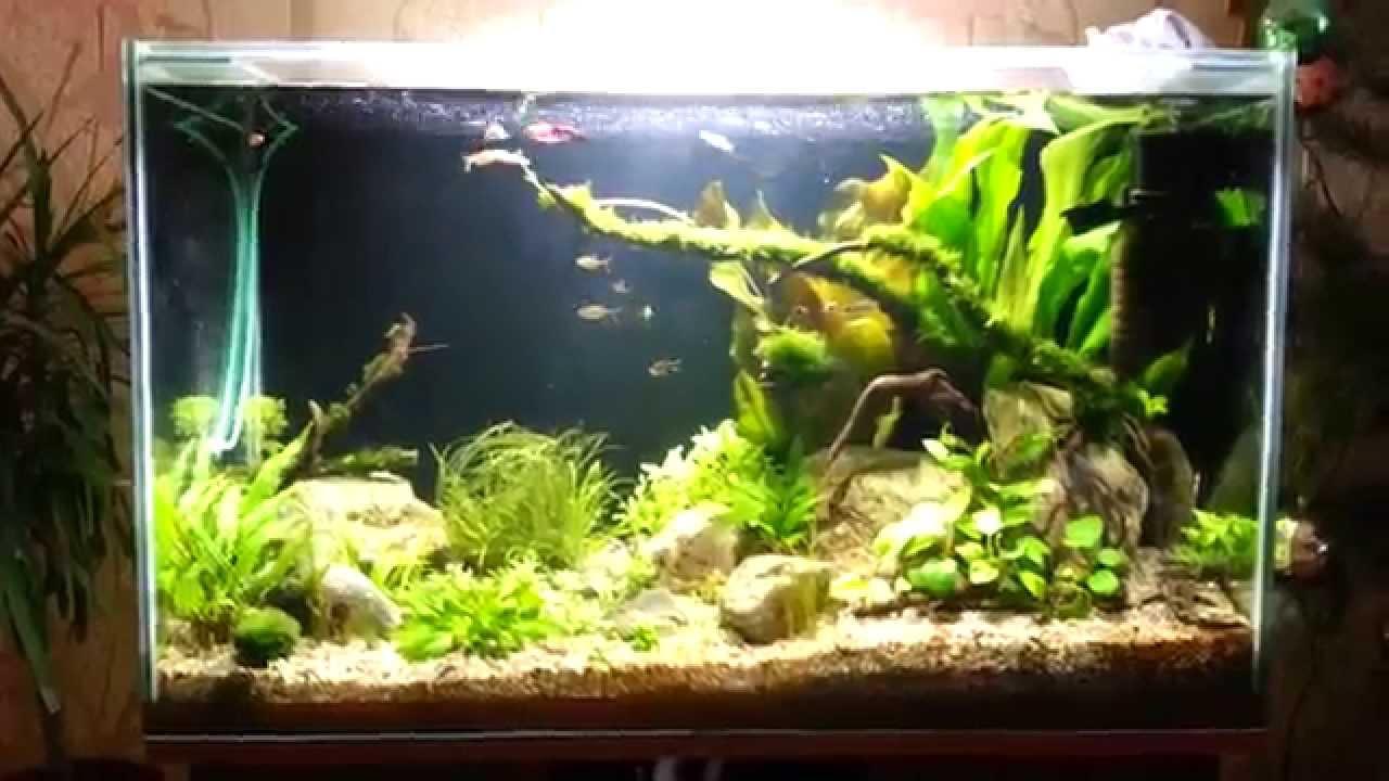 Травник в аквариуме своими руками