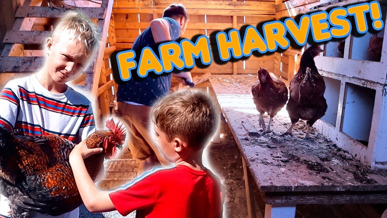 Farming Life! Harvesting Chickens!