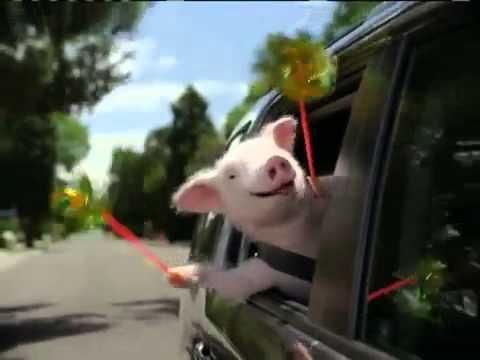 geico insurance commercial piggy - YouTube