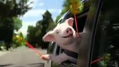 geico insurance commercial piggy