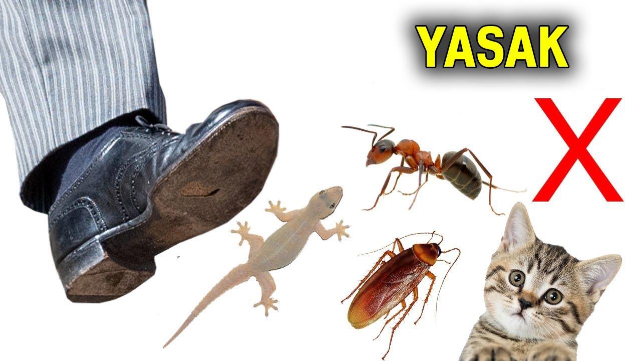 Öldürülmesi Haram Olan 4 Hayvan!! Cehennemlik Olma Sakın!!