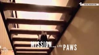 Коты шпионы