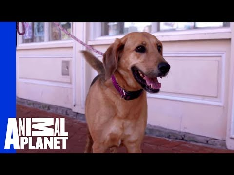 Waiting for a Forever Home: Susie | Pit Bulls & Parolees