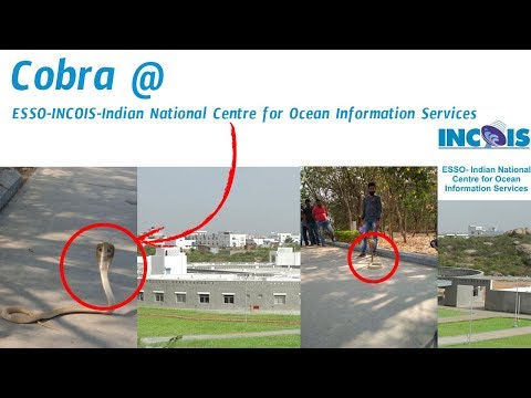 Cobra Snake at INCOIS Hyderabad | Indias Most Danger Snake | Most Dangerous snake | Most Dangerous