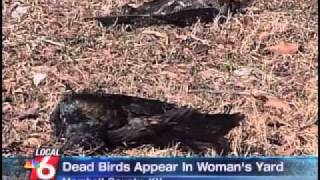 Dead birds mysteriously appear in Kentucky, Fox WDBR Channel 41, Ja...