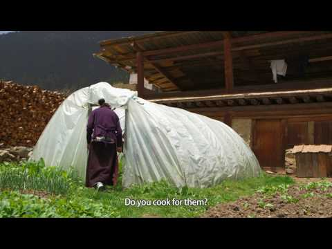 《Tibet Short Documentaries》——A Young Couple's Farm Stay Business