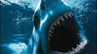 фильм документальный 2018 Большая белая акула. Атака акулы. Документальный фильм.