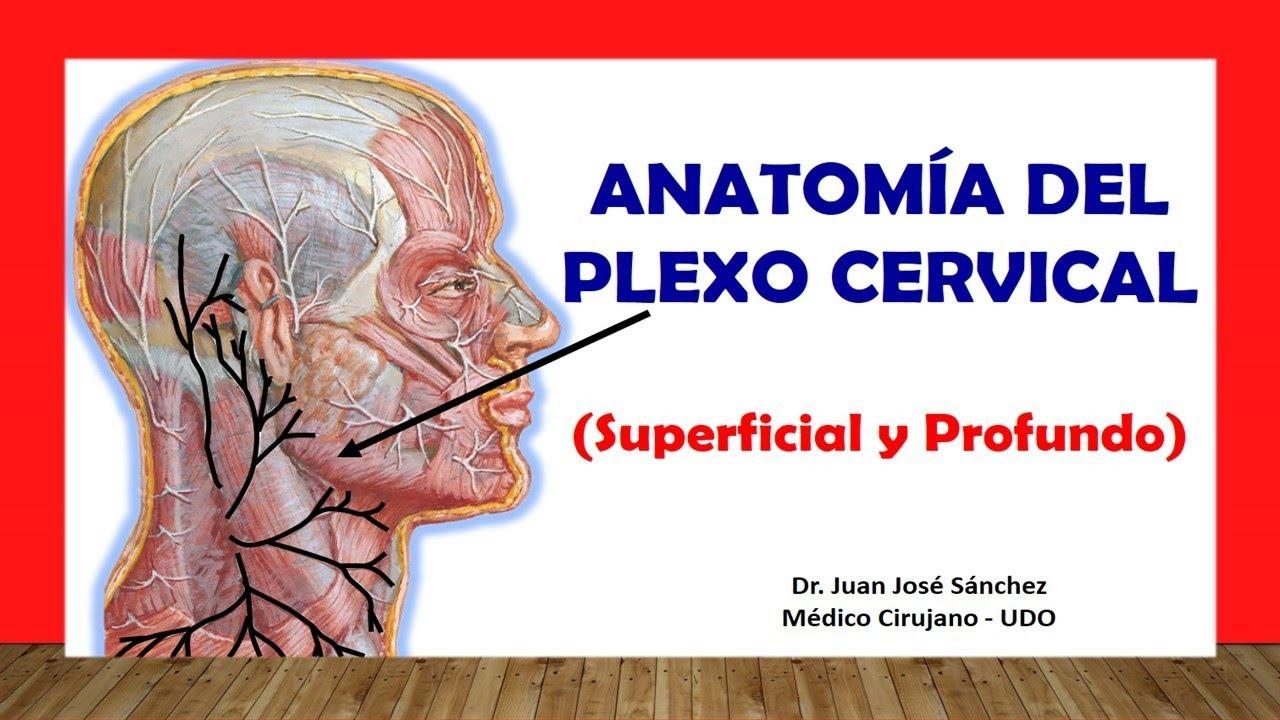 Cuello 7 - Nervios del Cuello 1, Nervio Frenico, Plexo Cervical ...