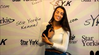 miss teen n dakota purchases her puppy from star yorkie kennel