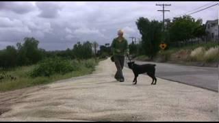 No Pulling!: Clicker Dog Training