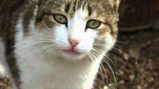 грустное видео про кошек