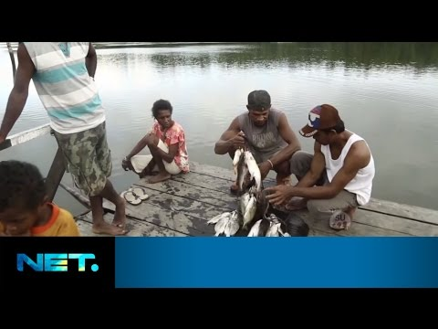 Teluk Bintuni - Papua Barat | Indonesia Bagus | Fransiska-Yasmina-Farabi | NetMediatama