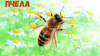 Насекомые для детей. Учим насекомых их голоса и звуки.