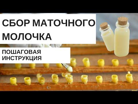 Маточное молочко пчелиное как добывают видео