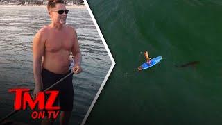 Rob Lowe: Shark Bait?   TMZ TV