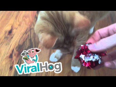 My Blind Cat Plays Fetch