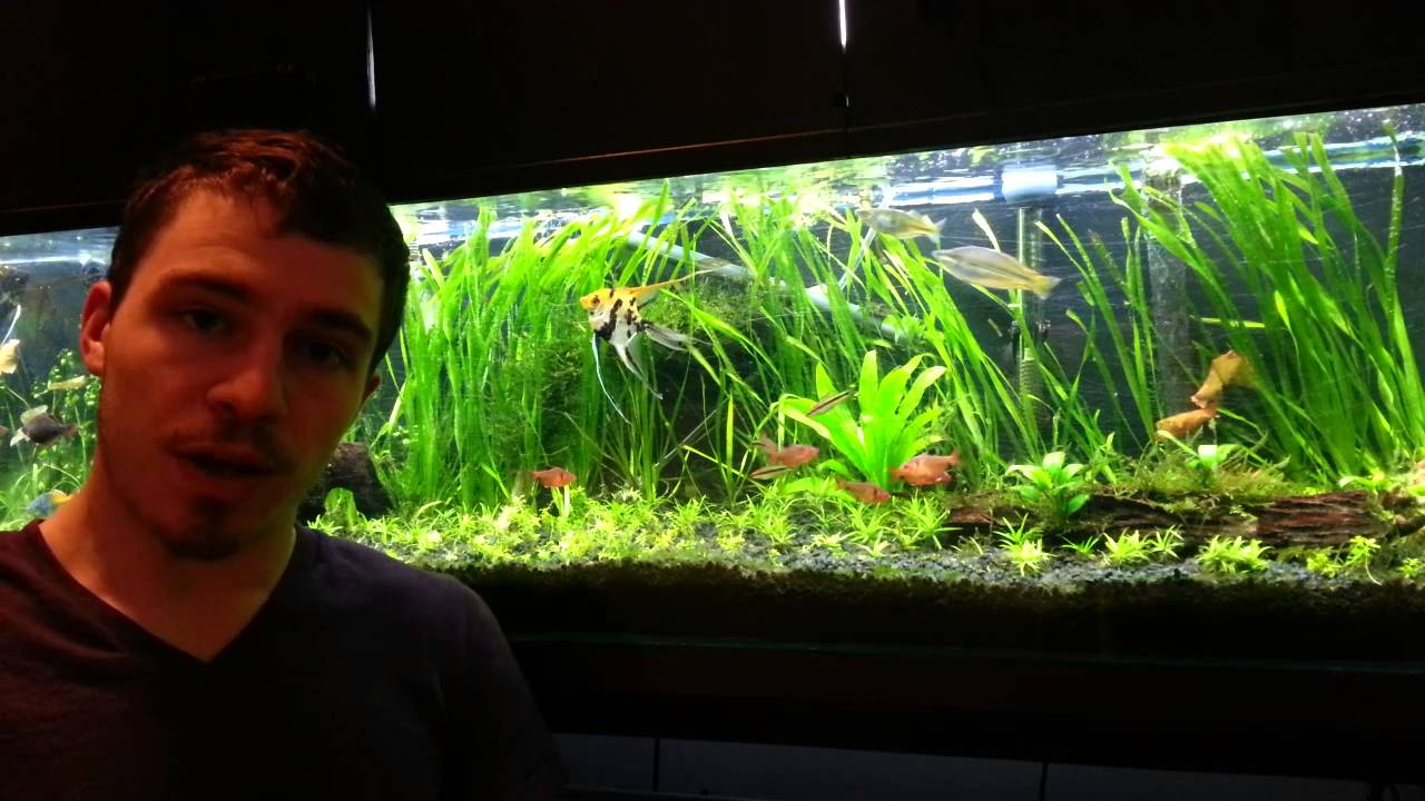 Freshwater fish tank youtube - How To Cycle New Tank Youtube