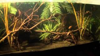 Aquarium As Of June 15, 2012