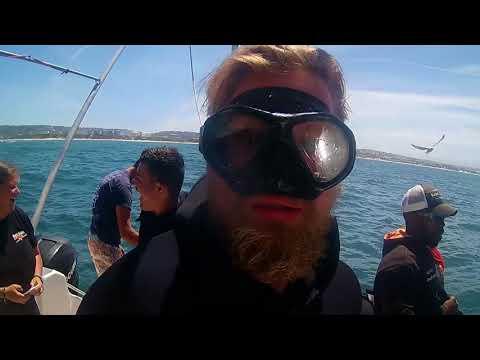 Shark Diving Mossel Bay South Africa