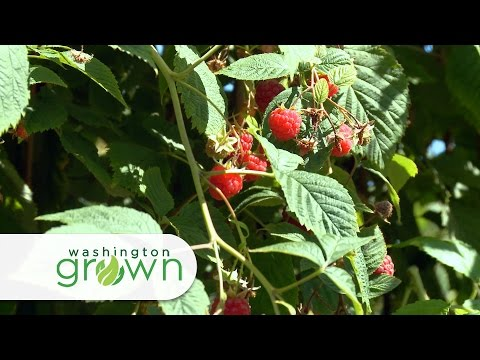 "Washington Grown Season 4 Episode 03 ""Red Raspberries"" with Cooking Segment"