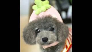шапки для собак купить