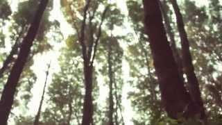 El Bosque Llama - Camarones del aljibe - El plan de la mariposa - Nokreo experimento - Hernan Risso