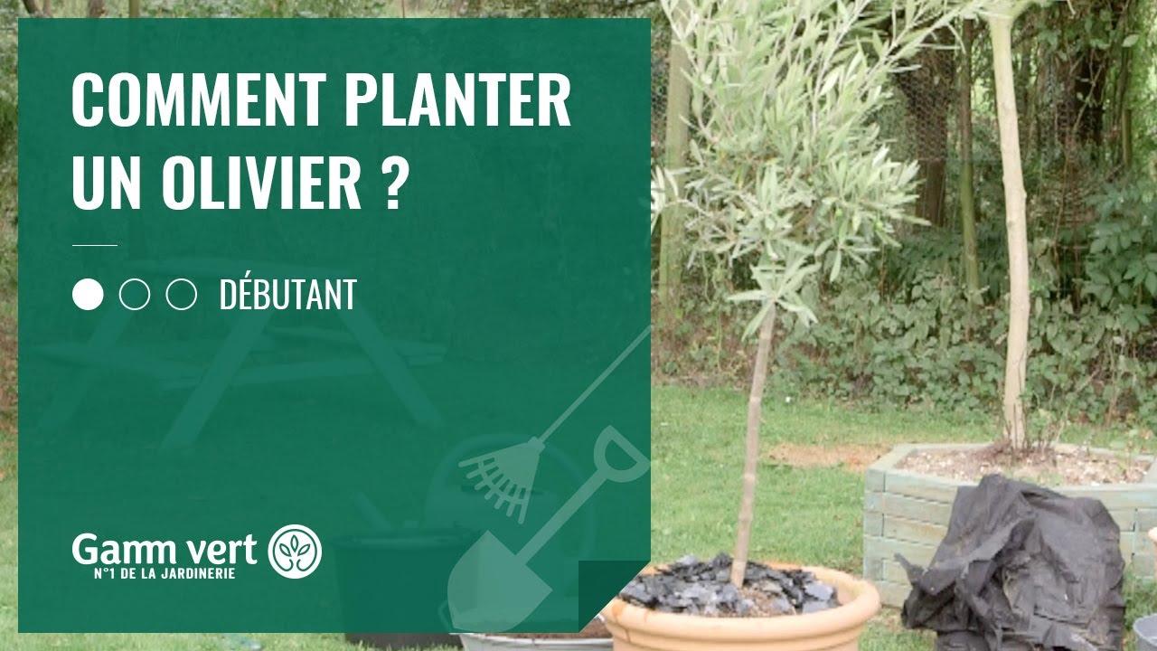TUTO] Comment planter un olivier ? - Jardinerie Gamm vert - YouTube