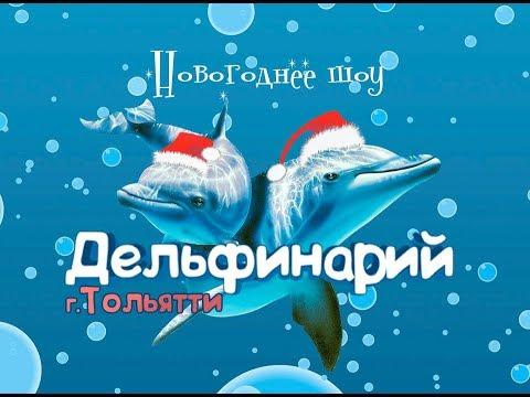 Дельфинарий в Тольятти 2017 Волгарь